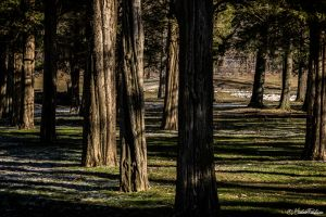 RingwoodManorJan2013-413-Edit.jpg